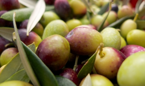 olives_flickr_8159035392_f17c38eaa8_b © Dom
